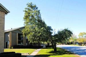 Oncor tree trim by Rodger Mallison for Fort Worth Star-Telegram