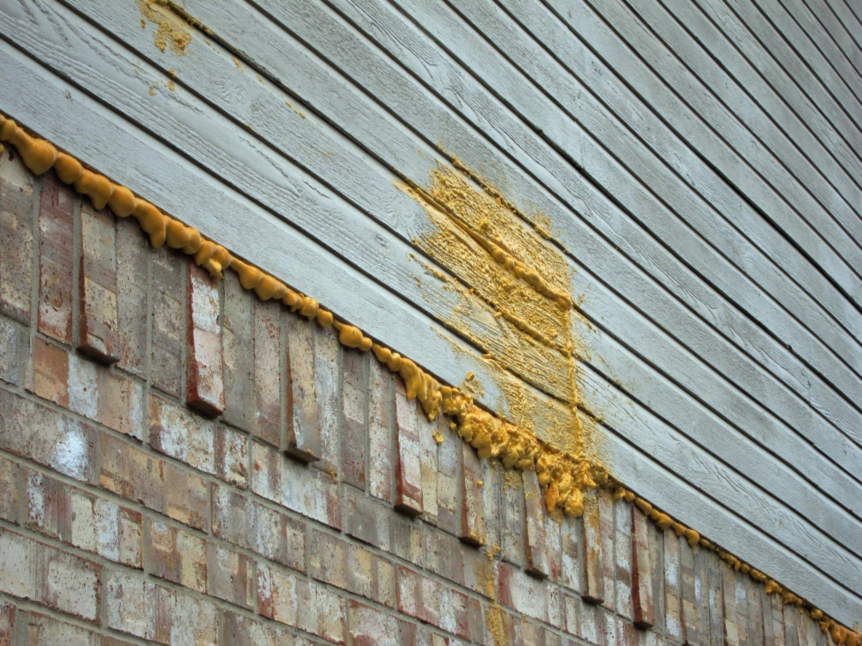 Image Result For Carpenter Bee Removal